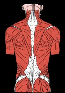 rodzaje bólu plecy