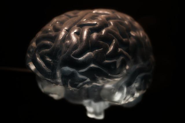 Mózg układ nerwowy neurony